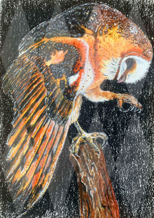 Barn Owl - Personal Use License