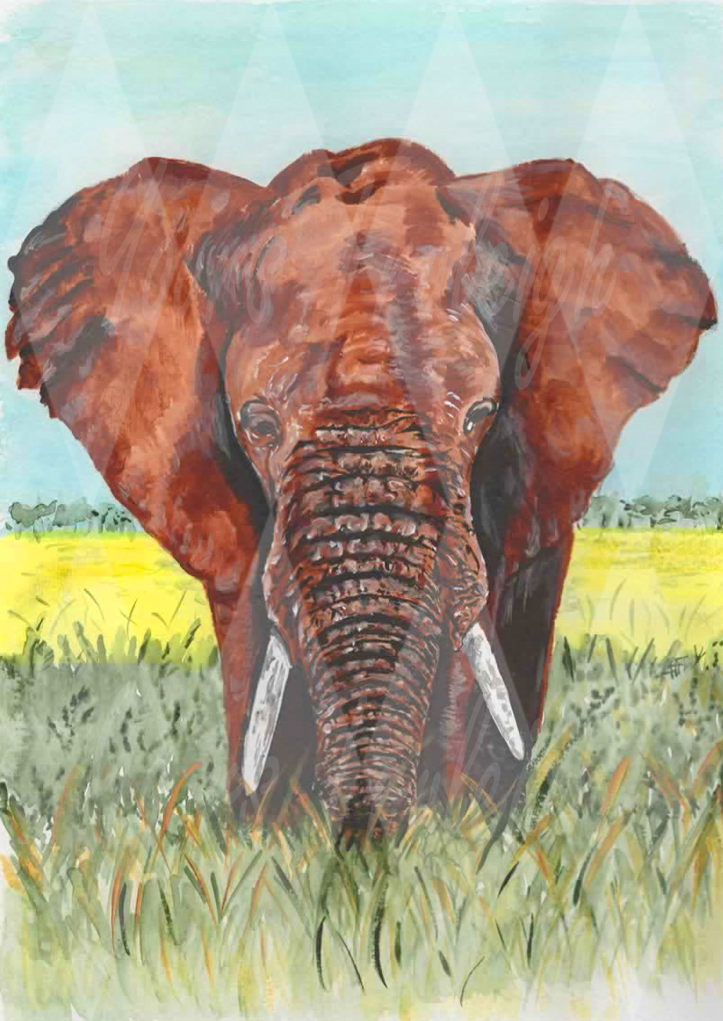 Elephant - Personal Use License