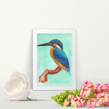 The common Kingfisher - A4 Print - Mounted
