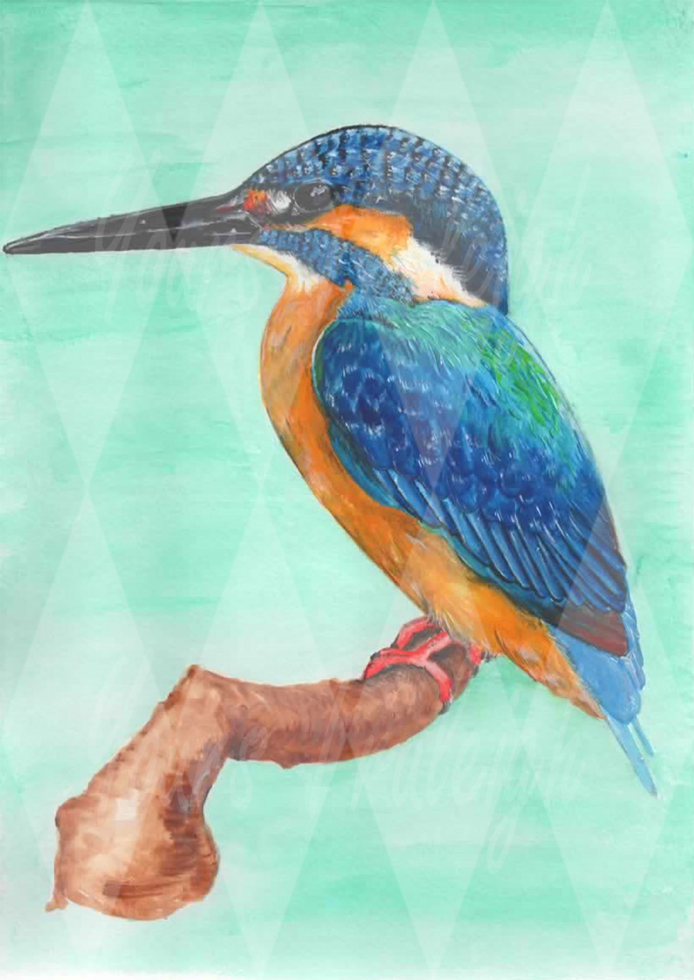The common Kingfisher - Personal Use License
