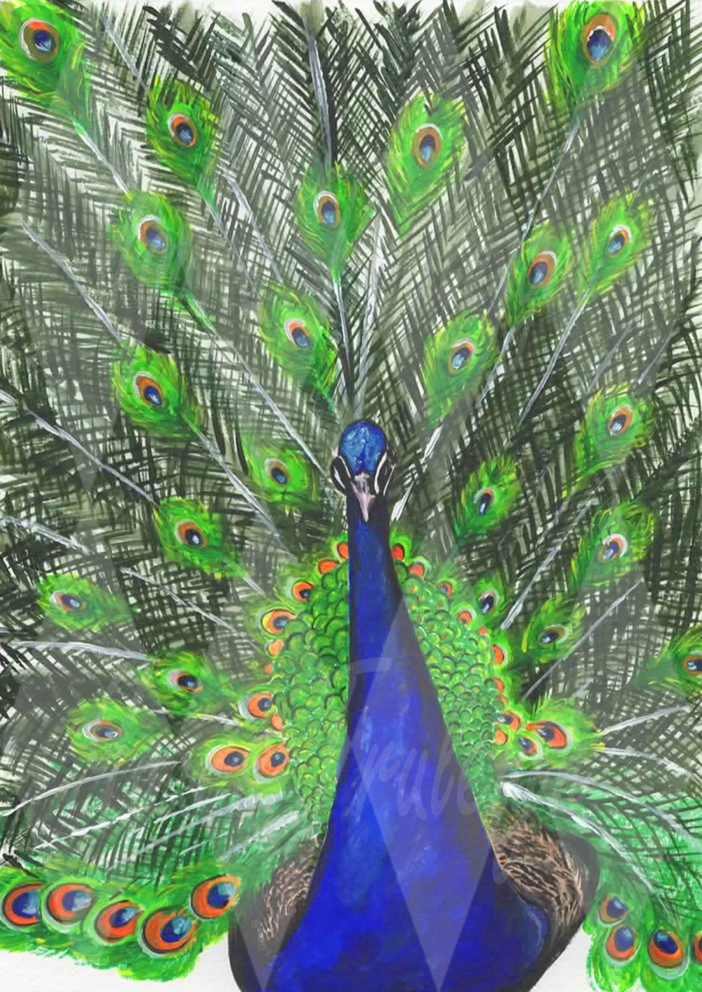 Peacock - Personal Use License